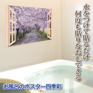 風呂ポスター桜並木